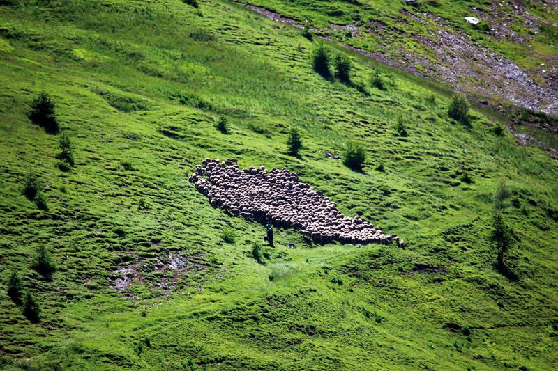 La Grave troupeau © cmielle